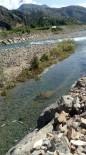 ÇORUH - Baraj Kapakları Kapatılınca Çok Sayıda Balık Telef Oldu