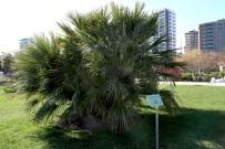 MOBİL UYGULAMA - Konuşan ağaçlar projesi teknoloji çevreyle buluşturuyor