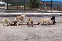 ULUDAĞ - Osmangazi'den Sokak Hayvanlarına Şefkat Eli