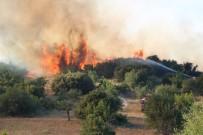 AFAD'tan Orman Yangınlarına Karşı Uyarı