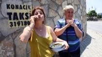 YABAN DOMUZU - Bodrum'da Aç Kalan Domuz Sürüsü İlçe Merkezine İndi