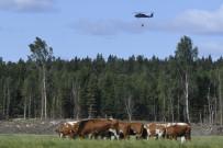 STOCKHOLM - İsveç'te 2,5 Kilometrelik Alanda Orman Yangını