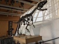 AÇIK ARTIRMA - Jura Devrine Ait Dinozor, 2 Milyon Dolara Satıldı