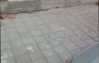 Tosya'da Deprem Sonrası İlçe Merkezde Yılan Yakalandı