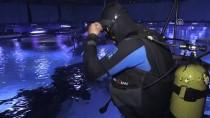 DAMACANA - Dalgıçların Köpek Balıkları Arasında 'Akvaryum Mesaisi'