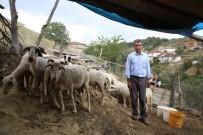 SEVINDIK - (Özel) Göçten Vazgeçip Hayvancılığa Başladılar