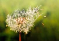 SONBAHAR - Yaz geldi polen alerjisine dikkat