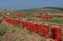 TONAJ - Amik Ovası'nda Soğan Hasadı