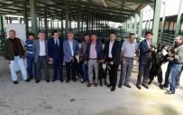 FATMA ŞAHIN - Çiftçilere 'Honamlı Cinsi Teke' Dağıtıldı