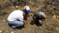 14 ŞUBAT - Datça'da Yanan Ormanlar Yerine Dikilen Fidanlar Sulandı