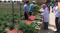 SEBZE ÜRETİMİ - Hükümlü Ve Madde Bağımlıları Cezalarını 'Sebze Üreterek' Çekiyor