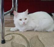 PARA ÖDÜLÜ - Kayıp Kedisini Bulana 2 Bin Lira Ödül Verecek