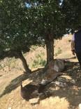 YILDIRIM ÇARPMASI - Kulp'ta Yıldırım Düşmesi Sonucu 5 Hayvan Telef Oldu
