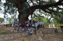 ÇINAR AĞACI - Kuşadası'nda Anıt Ağaç Ve Tüllüşah Vadisi Turu