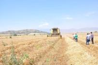 KIRAÇ - Güneydoğu'da buğday ve arpa hasadı başladı