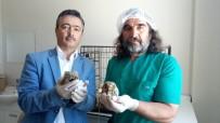 VAN YÜZÜNCÜ YıL ÜNIVERSITESI - Yavru Kukumav Kuşları Tedavi Altına Alındı