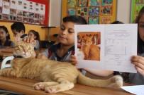 DÜNYA BASINI - Fenomen Kedi Tombi'nin Dersleri 'Pekiyi'