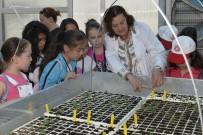 ÇOCUK MECLİSİ - Küçük Bahçıvanlar İş Başında