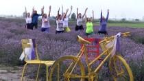 EKOLOJIK - Lavanta Tarlasında Yoga Yaptılar