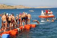 TÜRKİYE YÜZME FEDERASYONU - Türkiye Açık Su Yüzme Şampiyonası Foça'da