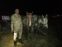 İNCİ KEFALİ - Van'ın Erciş İlçesinde 9 Ton Balık Ele Geçirildi