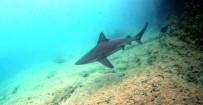 GÖKOVA - MSKÜ Su Ürünleri Fakültesi Dekanından Köpek Balığı Açıklaması
