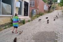 SADAKA - (Özel) Mahalleyi Hayvanat Bahçesine, Evini Kliniğe Çevirdi