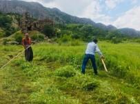 KATO DAĞı - Terör Yüzünden Ekilemeyen Araziler Yeşillendi