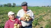 SÜLEYMAN YıLDıZ - Afyonkarahisar'da Patates Hasadı Başladı