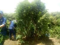 BOZKÖY - Jandarma'dan Bozdoğan Ve Germencik'te Uyuşturucu Operasyonu