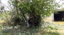 TUANA - Konya'da Otomobil Ağaca Çarptı Açıklaması 6 Yaralı