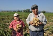KAZANCı - Sandıklı'da patates hasadı başladı