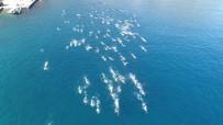 YÜZME YARIŞMASI - Yunan Adasından Türk Topraklarına 7.1 Kilometrelik Kulaç