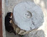 CAMİİ - 600 Yıllık 'Sadaka Taşı' Hayvanlara Umut Oldu