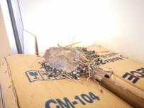 YUMURTA - Açık Pencereden Ofise Giren Kuş Yuva Yaptı