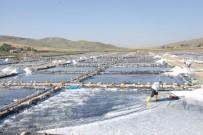 GÜNEYDOĞU ANADOLU - Aktuzla'da Günde 120 Ton Tuz Üretiliyor