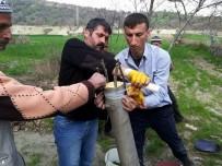 Diyarbakır'da 18 Bin 842 Meyve Ağacı Aşılandı