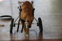 TRAFIK KAZASı - Felçli Sokak Hayvanları İçin Umut