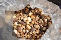 HAŞHAŞ - TMO Manisa Ve İlçelerinde İlk Kez Haşhaş Kapsülü Ve Ürünlerini Alınmaya Başlandı