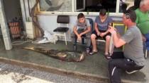 Aldıkları Balığı 3 Kişi Zor Taşıdı