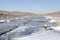 GÜNEYDOĞU ANADOLU - Burada Günde 120 Ton Tuz Üretiliyor