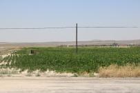 TARIM BAKANLIĞI - Çukurkuyu'da Tarıma Dayalı Hayvancılık Bölgesi Kuruldu