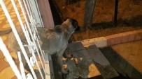 AİLE HEKİMLİĞİ - Demir Korkuluklara Sıkışan Köpeği Polis Ve Hayvan Severler Kurtardı