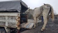 KÖPEK DÖVÜŞÜ - Hayvanlara İşkence Yapanlara Ceza Yağdı