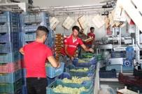 BEYAZ RUSYA - İhracatın İlk Günü 54 Tır Üzüm Gönderildi