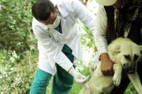 KıZıLCA - Mamak'ta Evcil Hayvanlar Aşılanacak