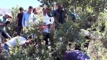 Menengiç Ağaçları İle Ekonomiye Katkı Gençlere İstihdam