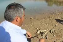 OKSIJEN - Sivas'ta Balıklar Karaya Vurdu