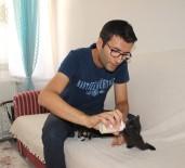 YAVRU KEDİ - Yavru Kedileri Biberonla Büyütüyor