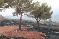 ÇAM AĞACI - Adıyaman'da Orman Yangını Söndürüldü